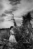 枯れた草木を集める少女