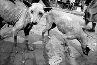2匹の犬 02265040461| 写真素材・ストックフォト・画像・イラスト素材|アマナイメージズ