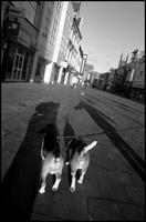 2匹の犬と人のシルエット