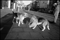 2匹の犬 02265040463| 写真素材・ストックフォト・画像・イラスト素材|アマナイメージズ