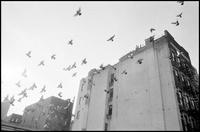 古いアパートと鳩の群れを見上げる。