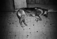 路上で寝る犬