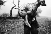 抱えられた犬