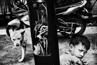 少年と犬 02265040622| 写真素材・ストックフォト・画像・イラスト素材|アマナイメージズ