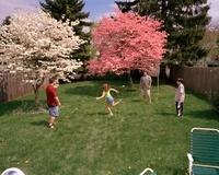 裏庭で遊ぶ人々と二本の樹