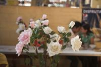 バラの花 02265040830| 写真素材・ストックフォト・画像・イラスト素材|アマナイメージズ