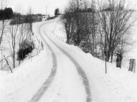 雪に覆われた道