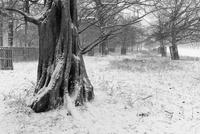 雪降る公園の木