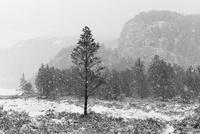 雪の中の木々