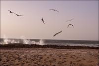 海岸を舞うカモメ