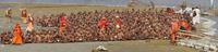 クンブメーラ祭に集まったサドゥ