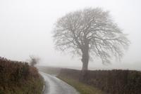 一本の道と木