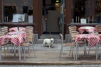 カフェの入り口の犬