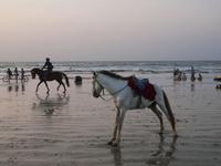 夕暮れのチャウンター・ビーチと馬