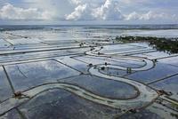 洪水被害にあった稲田