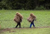干草を運ぶ農民