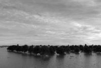 洪水被害にあったマンゴープランテーション