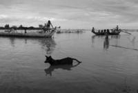 洪水の為舟で移動する人々と水の中を歩く犬