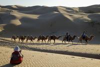 砂漠の中を隊列を組むラクダ