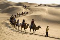 砂漠のラクダの隊列