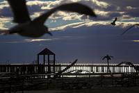 カモメの飛ぶ海の風景