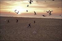 カモメ舞う浜辺