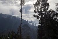 早朝の森林風景