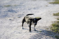 道ばたの子犬