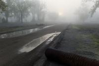 靄の中の水たまり
