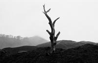 一本の枯れた木