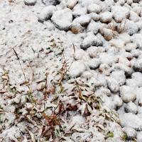 うっすら雪が積もった小石と草