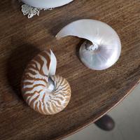 テーブルの上の二つの大きな貝殻