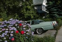 紫陽花とモスグリーンのアメ車