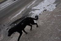 黒い犬 02265041290| 写真素材・ストックフォト・画像・イラスト素材|アマナイメージズ