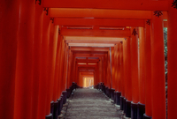 JAPAN. Kyoto. 1984. Fushimi Temple with hundreds of red Torii along its walkways.