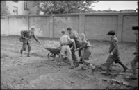 POLAND. Warsaw. 1948. Boys use wheelbarrow and tools to plant a garden. 02265047403| 写真素材・ストックフォト・画像・イラスト素材|アマナイメージズ