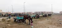 Morrocco. Marrakech.  November 2013. 02265047517| 写真素材・ストックフォト・画像・イラスト素材|アマナイメージズ