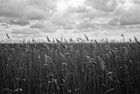 GERMANY. Koos Island, Bay of Greifswald, Mecklenburg-Vorpommern. April 2013. 02265047572  写真素材・ストックフォト・画像・イラスト素材 アマナイメージズ