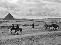 EGYPT. Cairo. December 2013. Tourists at the Giza pyramids on the outskirts of Cairo. 02265047630| 写真素材・ストックフォト・画像・イラスト素材|アマナイメージズ