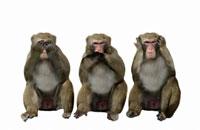 見ザル言わザル聞かザル姿の3匹の日本猿