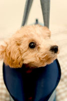 かばんの中から首だけ出した犬