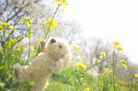 花畑を歩く犬のぬいぐるみ