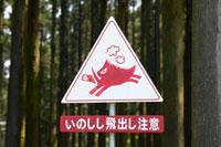 森林のイノシシ注意の看板 02266012898| 写真素材・ストックフォト・画像・イラスト素材|アマナイメージズ