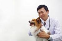 病院にて獣医に診察してもらっている犬 02266016175| 写真素材・ストックフォト・画像・イラスト素材|アマナイメージズ