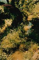 野原を流れる川