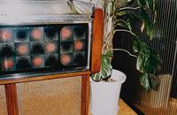 観葉植物 02267000031| 写真素材・ストックフォト・画像・イラスト素材|アマナイメージズ