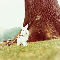 草原の木の幹そばに佇むウサギ