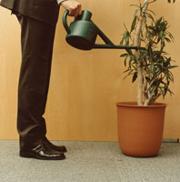 観葉植物に水をやるビジネスマン 02275000291| 写真素材・ストックフォト・画像・イラスト素材|アマナイメージズ