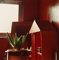 赤い部屋のサボテン