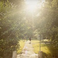 緑の中の道と太陽